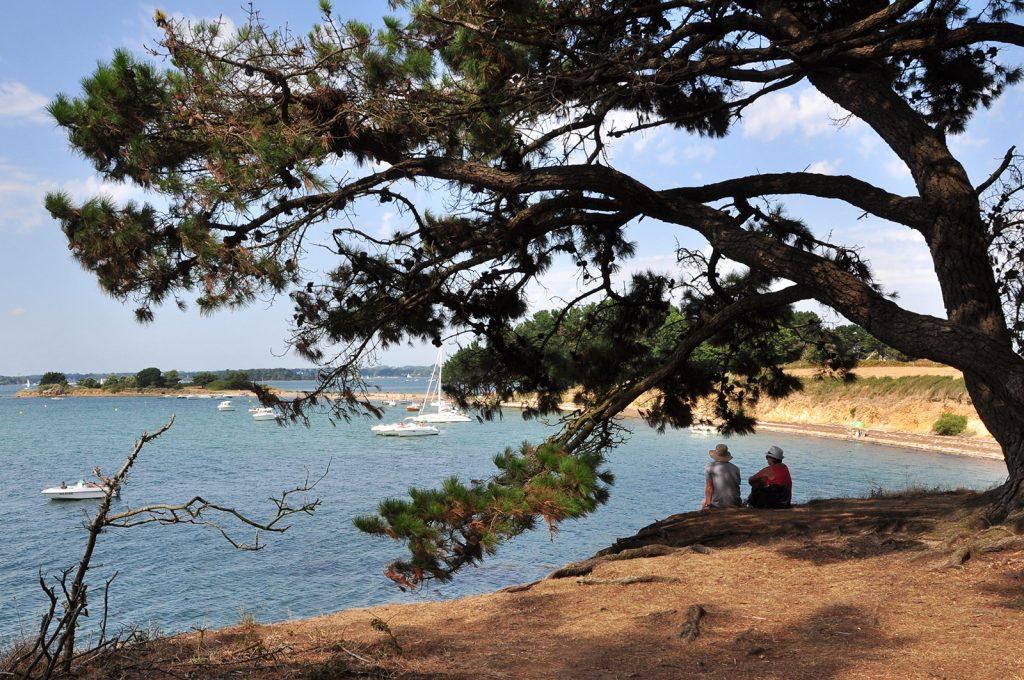 La faune et la flore du Golfe du Morbihan
